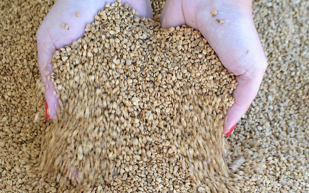 Conoce nuestro hueso de aceituna con certificado Biomasud clase A