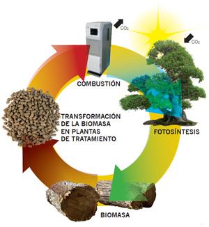 Biomasa Ciclo de la Naturaleza
