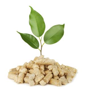 Biomasa Estufas y calderas